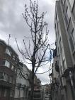 Arbre rue Emile Feron